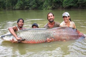 THE PAICHE, THE KING FISH  OF THE AMAZONAS