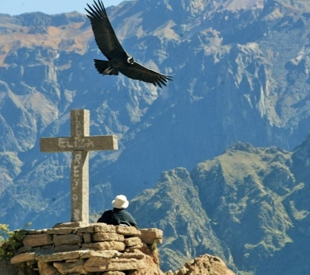 Incredible Tour of the Colca Canyon and Colonial City of Arequipa
