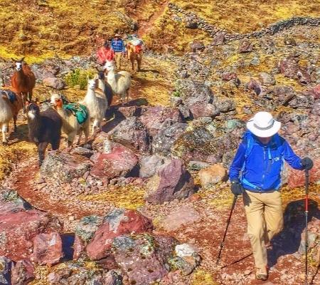 Deluxe Lares Llama Trek & Machu Picchu 8d
